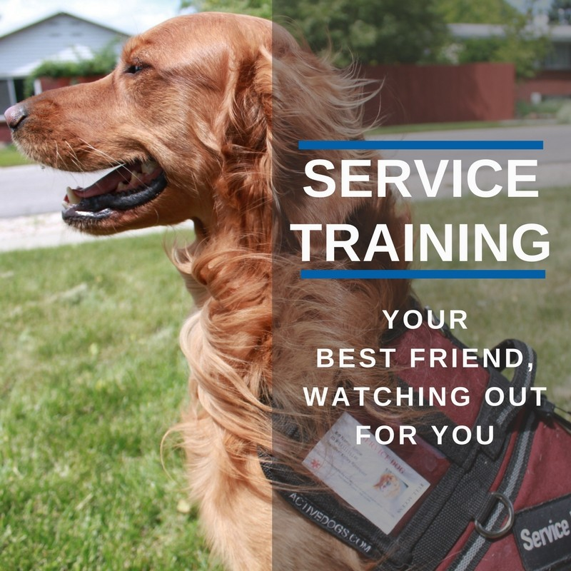 Dog Training Elite Tooele Valley   Bark Profile and Reviews